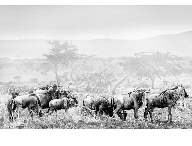Masai Mara  |  Kenya 2012