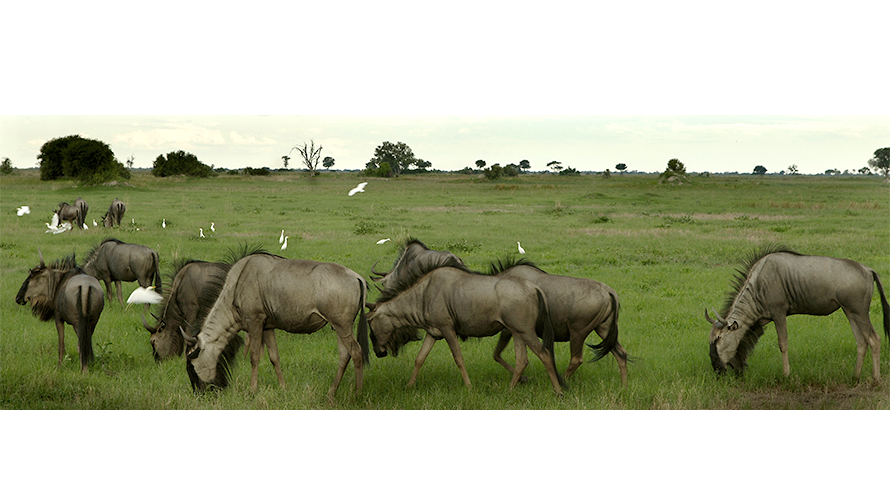 eddy-wenting-photography-botswana