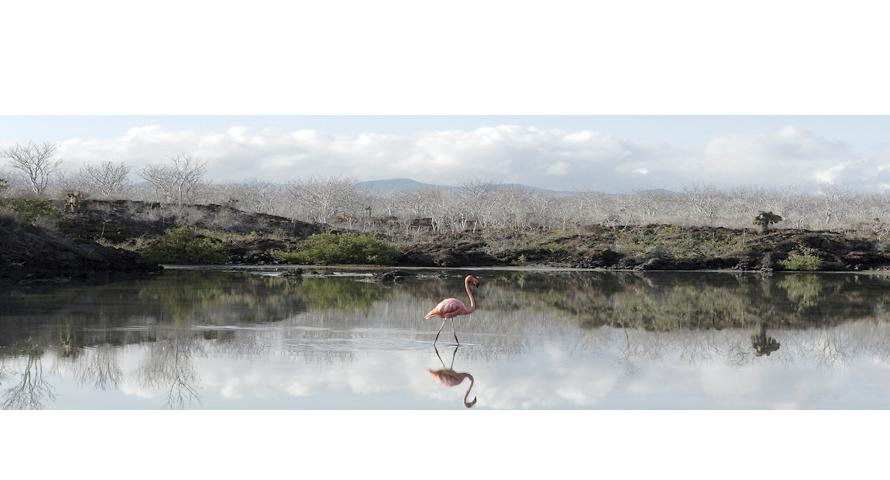 eddy-wenting-photography-galapagos-island-flamingo