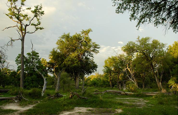 eddy-wenting-photography-botswana-forrest-landscape