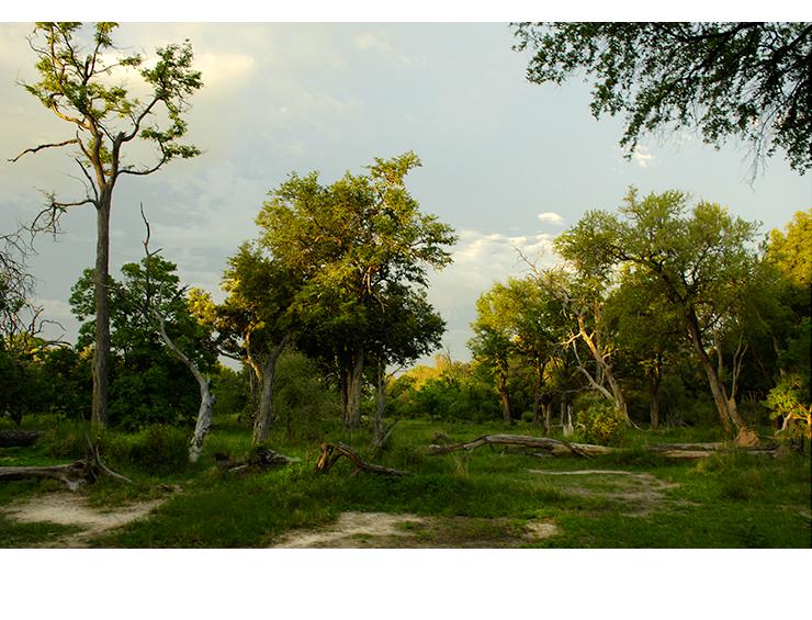 Forrest  |  Botswana 2006