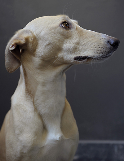 eddy-wenting-photography-dog-portrait-lepel