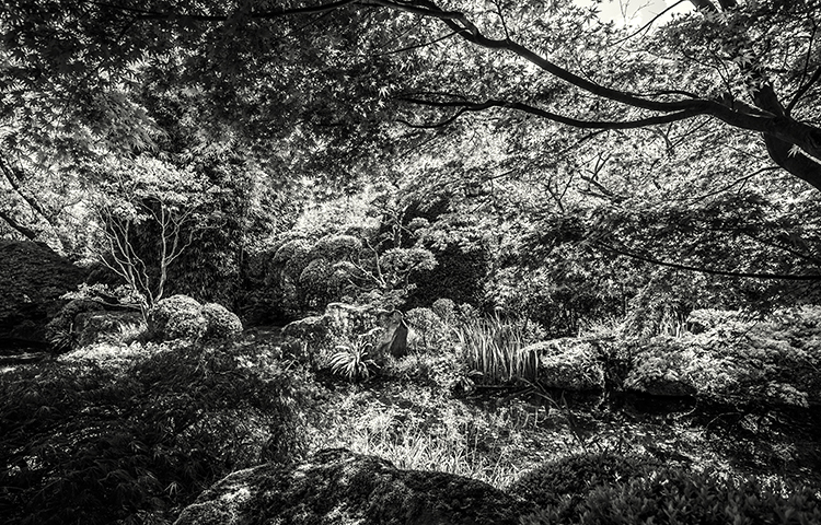eddy-wenting-photography-japanese-garden-landscape