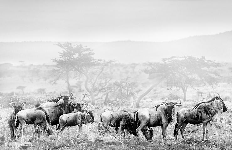 eddy-wenting-photography-kenya