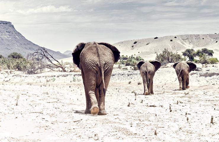 eddy-wenting-photography-landscape-elephant-namibia