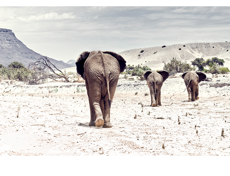 Elephants  |  Namibia 2008