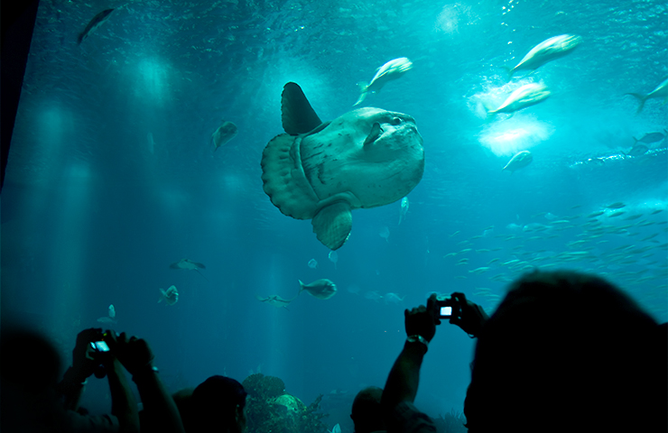 eddy-wenting-photography-oceanario--de-lisboa