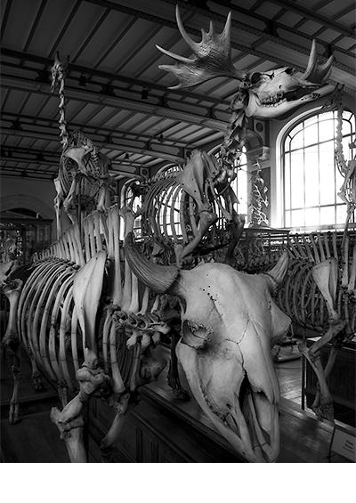 Muséum National d'Histoire Naturelle  |  Paris 2014