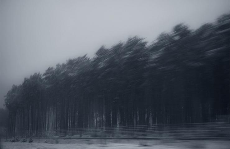 eddy-wenting-photography-poland-zgierz-trees