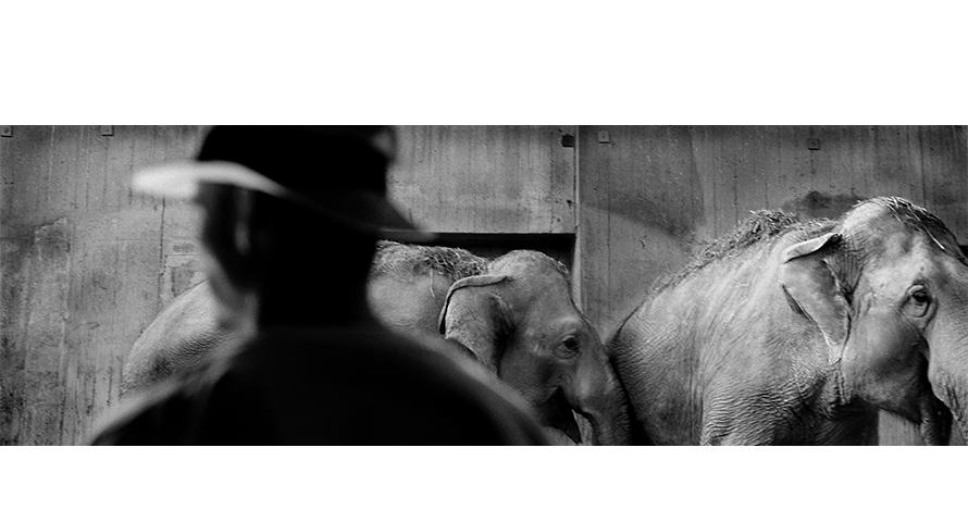 eddy-wenting-photography-zoo-elephant-prague